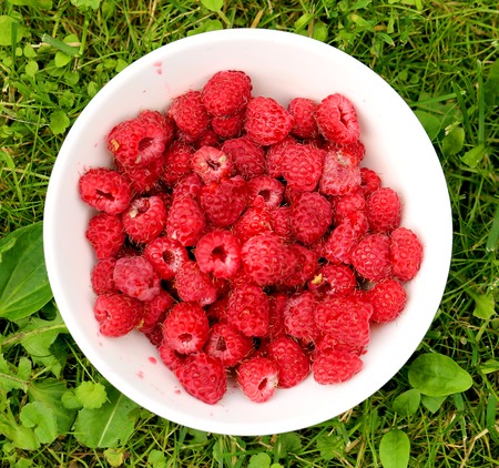 Photo of a summer macro of a delicious plate with raspberries on green grass
