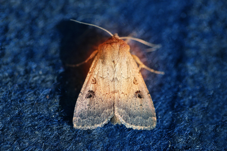 Photo of a summer macro of a beautiful night moth