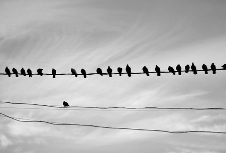 Photo of a close-up of many silhouettes of birds on wires on a light background