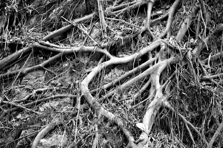 Photo of macro roots and tree branches in a tropical jungle 写真素材