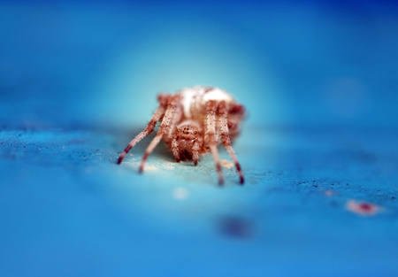 Photo of a bright macro spider cross on a blue background Stockfoto