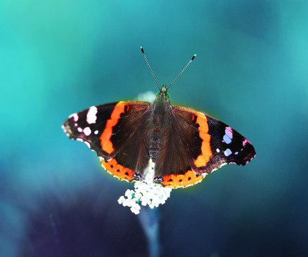 Photo of a close-up of a beautiful butterfly on a vegetative summer background Stock Photo