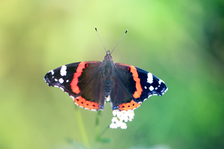 Photo of a close-up of a beautiful butterfly on a vegetative summer background Banco de Imagens