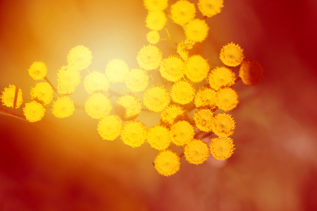 Photo of a macro vegetative summer retro background