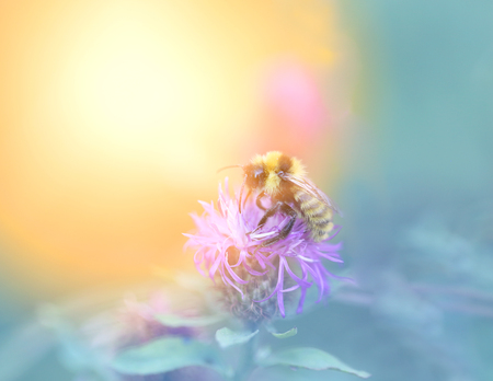 Photo of a macro bumblebee on plants blurred background