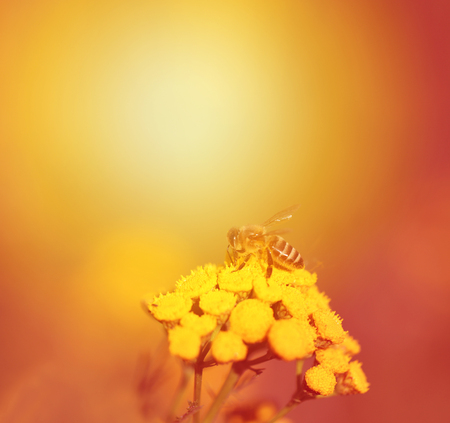 Photo of a macro bee on plants blurred background 写真素材