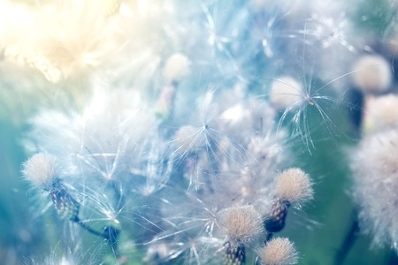 Photo of a macro vegetative summer retro background