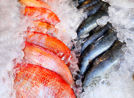 Photo of a macro background of delicious big fish in ice in a restaurant