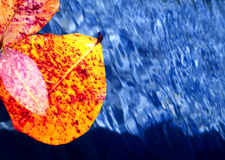 Stock Foto blue water background with autumn leaves Stok Fotoğraf