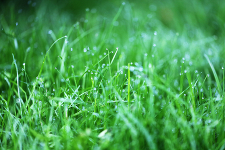 Photo of a bright green grass with dew drops in the early morning in the park
