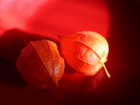 Photo macro beautiful bright physalis lit by the sun Stok Fotoğraf
