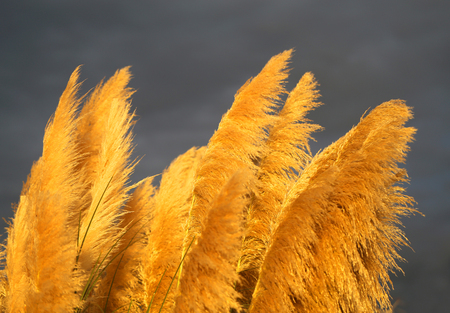 Photo of bright dry grass on sunset background