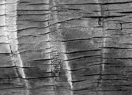 Tree trunk palm tree photographed close up 스톡 콘텐츠