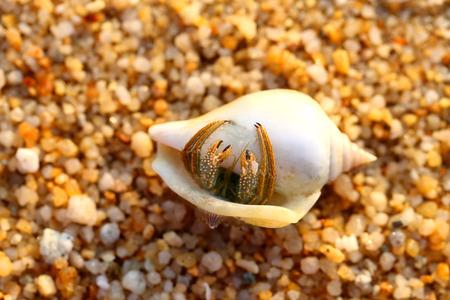heremietkreeft in de schelp op het zand