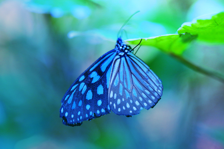 Beautiful blue tropical butterfly on blurred a background Standard-Bild - 115005656