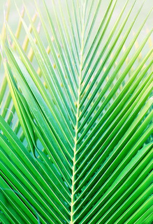 Bright macro photo of a green large leaf illuminated by the sun Archivio Fotografico - 115005665