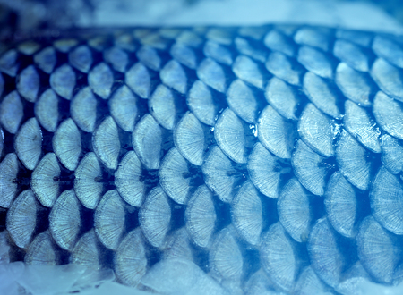 Photo of beautiful large fish scales Фото со стока