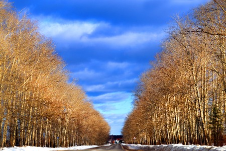 Photo background unusual bright landscape with trees and road and clouds Banco de Imagens