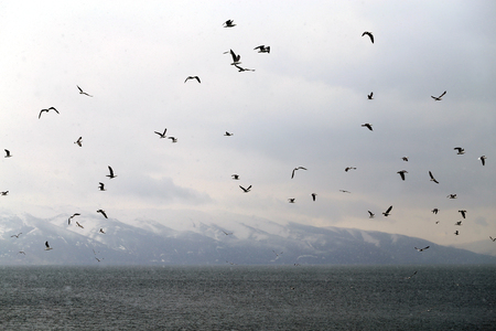 Beautiful spring landscape of a flock of seagulls on the background of lake Sevan