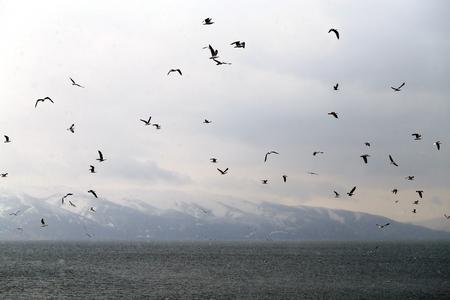 Schöne Frühlingslandschaft einer Herde von Möwen auf dem Hintergrund des Sees Sevan
