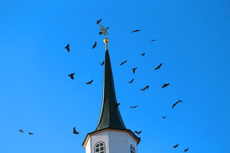Fine photo flight of a bird over a monastery