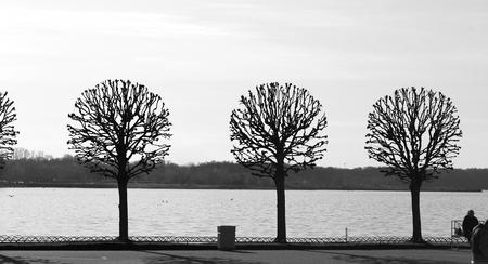Stock Foto Peterhof park trees in spring 写真素材