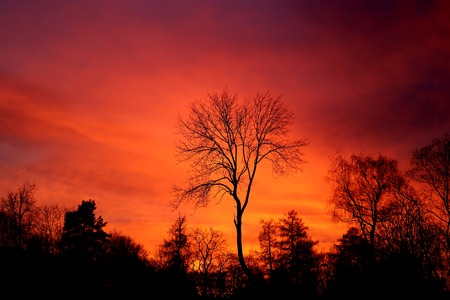 Bright photo of red sunset in the spring in the park