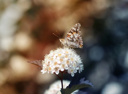 Photo of a close-up of a beautiful butterfly on a vegetative summer background