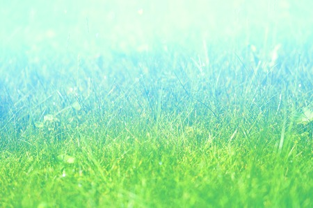Photo background macro green fresh grass lawn with drops of dew in the morning Stok Fotoğraf