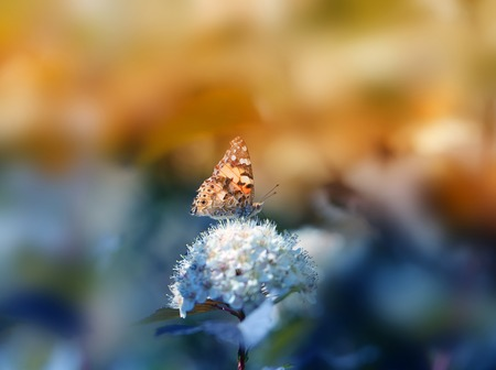 Photo of a close-up of a beautiful butterfly on a vegetative summer background Фото со стока