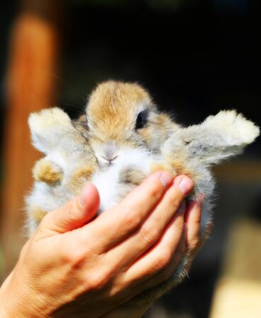 Macro photo of a funny fluffy little rabbit in his hands Stockfoto