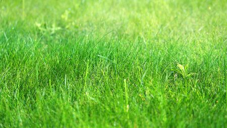 Photo background macro green fresh grass lawn with drops of dew in the morning Stock fotó