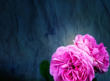Gorgeous retro photo background super roses