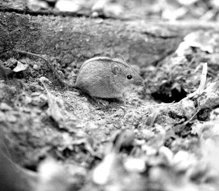 Macro photo of a little fluffy mouse Stockfoto