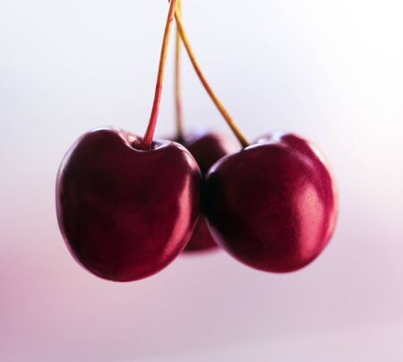 Macro photo of delicious ripe sweet cherries on a twig