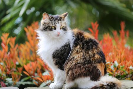 Photo of a bright portrait of a cat in a park on a spring day