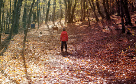 Photo walks in the autumn forest Sunny