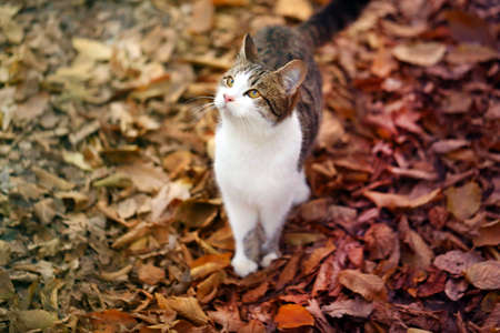 Photo of a cute hungry kitten in the autumn park
