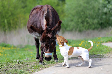 Photo of a donkey and a puppy on a farm Banco de Imagens