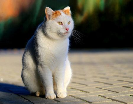 Photo of a beautiful white cat illuminated by the sun