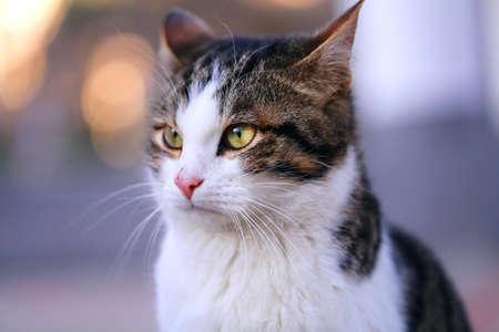 Photo portrait of a beautiful street kitten