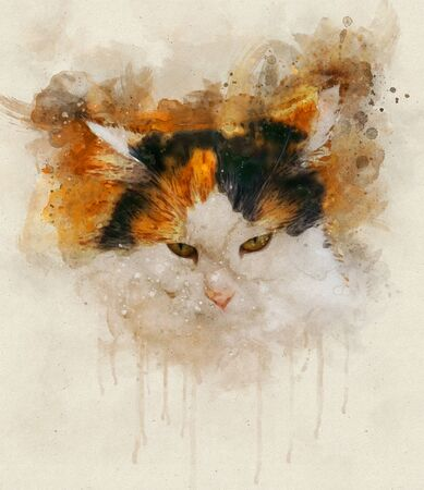 Watercolor illustration of a calico cat. Calico cats are domestic cats with a spotted or particolored coat that is predominantly white, with patches of two other colors.