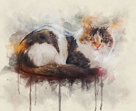 Portrait of a calico cat at home. Calico cats are domestic cats with a spotted or particolored coat that is predominantly white, with patches of two other colors.