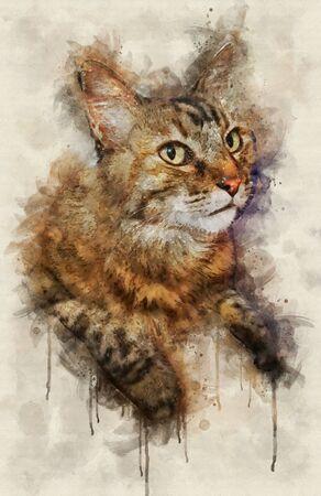 Watercolor illustration of tabby cat portrait lookin up