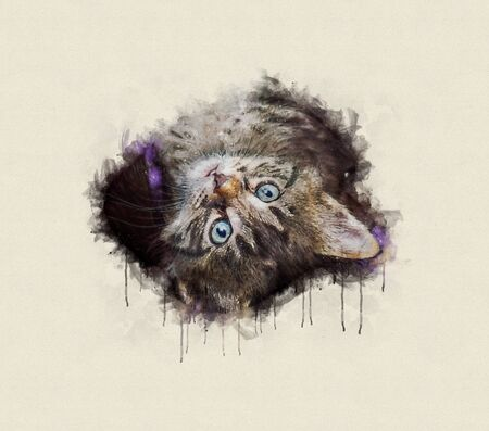 Watercolor illustration, Little tabby cat resting, looking up.