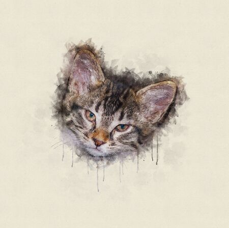 Watercolor illustration, Head of a little tabby cat