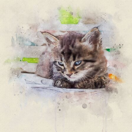 Watercolor illustration, Portrait of a little tabby cat with blue eyes resting. Stok Fotoğraf