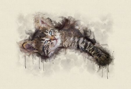 Watercolor illustration, Little tabby cat resting.