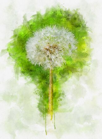 Watercolor illustration of a dandelion flower on a nature green background.  Springtime in meadow. Stok Fotoğraf