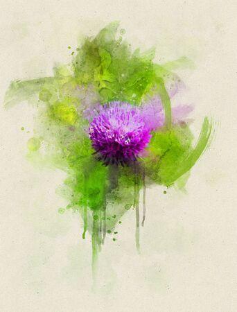 Watercolor illustration of milk thistle flower in the springtime on green brush strokes. Stok Fotoğraf